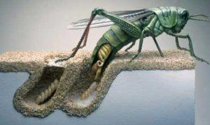 belajar hidup dari belalang