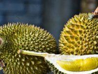 Berbagai Kota yang Wajib Dikunjungi Oleh Para Pencinta Durian